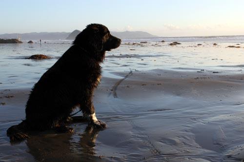 Still-pup